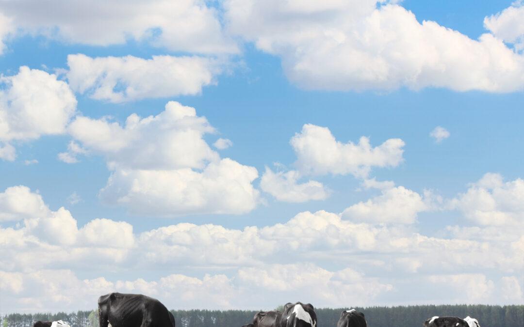 Astro Adopts Blue Cow Logo